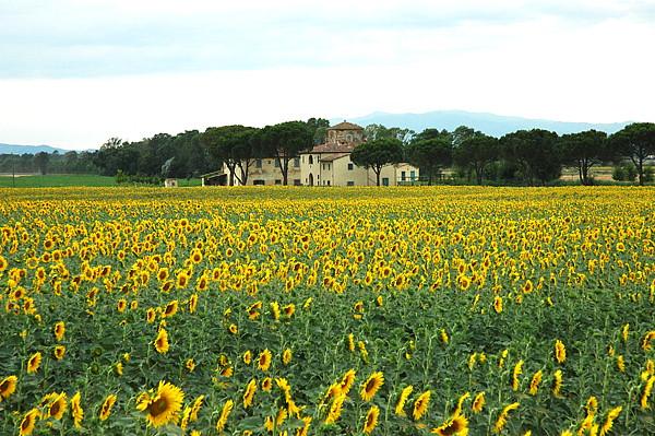 Klein Hotel In Toscaanse Boerderij Tussen Zonnebloemen In