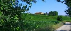 Wijnboerderij met zwembad en restaurant in Piemonte